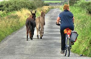 Le vélo sur la piste cyclable de Loop Head