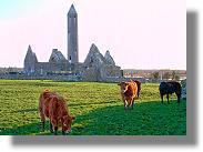 Kilmacduagh Abbey near Gort